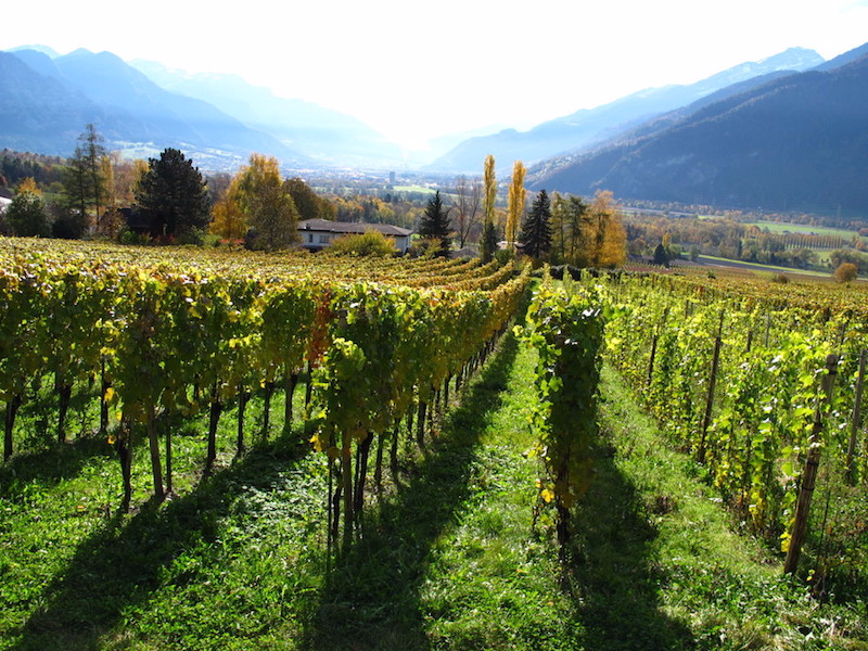 "Picture of The Grisons - ""the small area of ​​the great wines"""