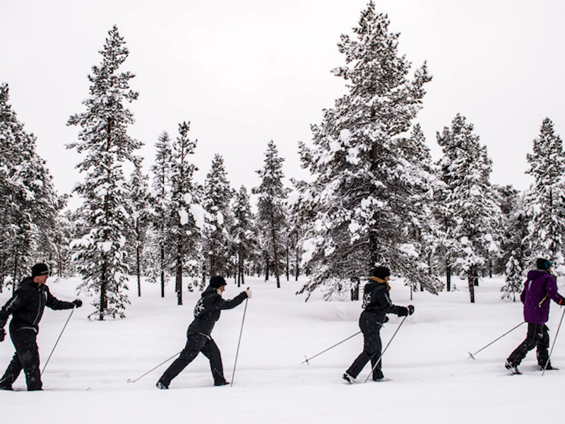 Picture of Cross Country skiing