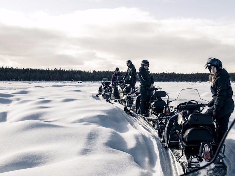 Picture of Arctic wildlife safari on snowmobile