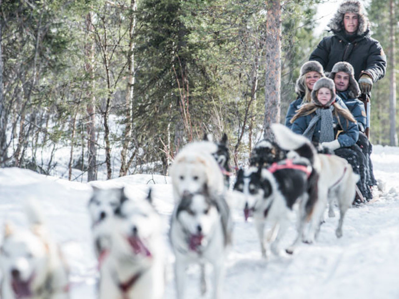 Picture of Sled dog ride in winter wonderland