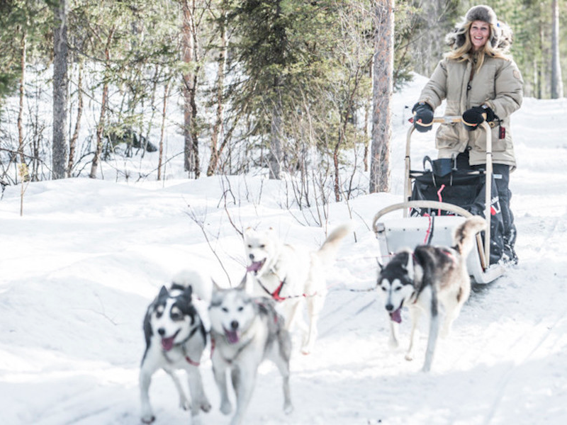 Picture of Driving your own dog sled – the ultimate adventure