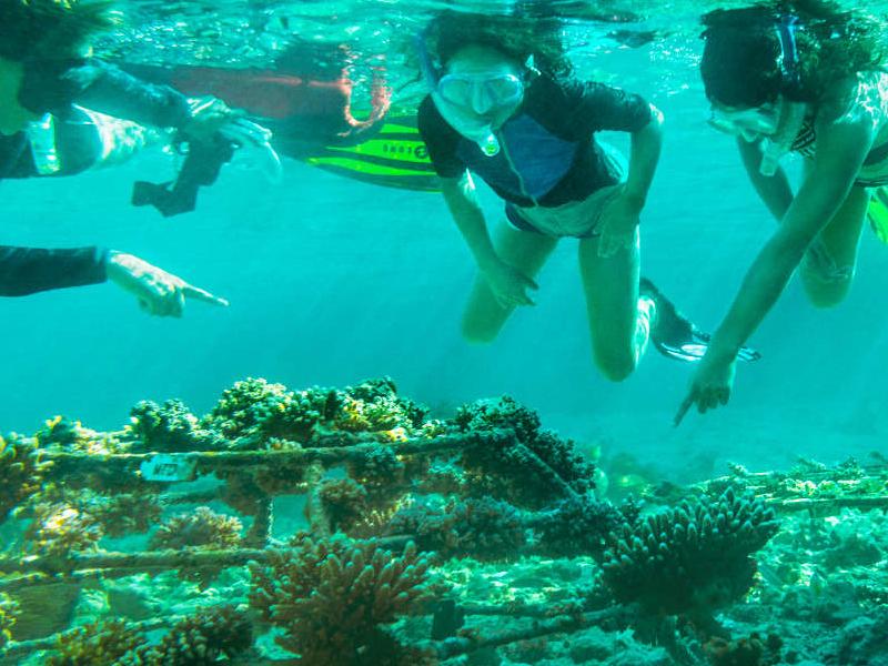 Picture of Aqua Safari with Marine Biologist
