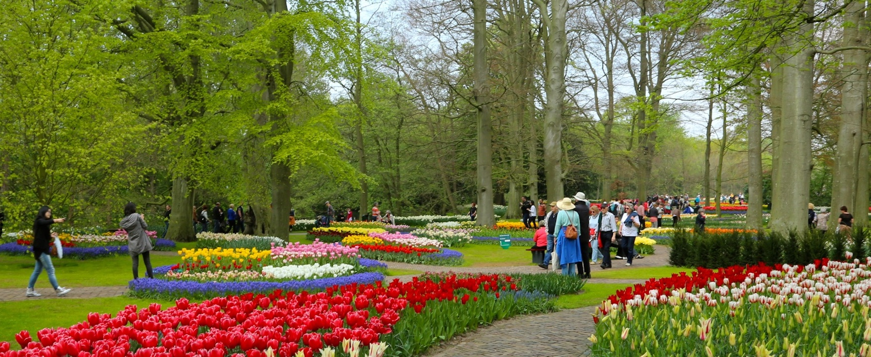 8 Day Netherlands & Belgium : Amsterdam - Antwerpen - Bruges or vice versa premium , Discover the best of Holland & Flanders