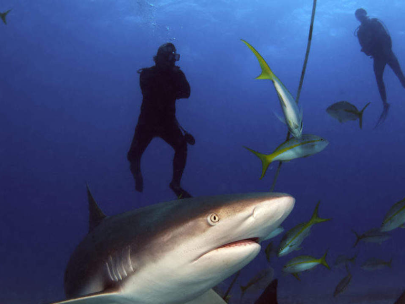 4 Days Diving Cape Town Shark Adventure
