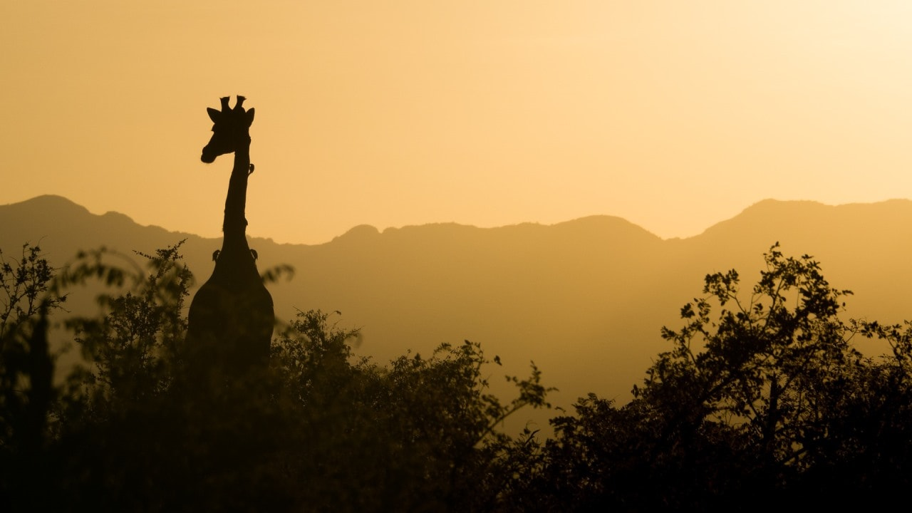 Africa's Kruger National Park